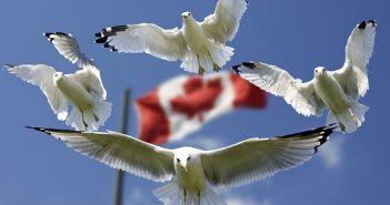 Voyage, voyage d'affaires, voyage au Canada